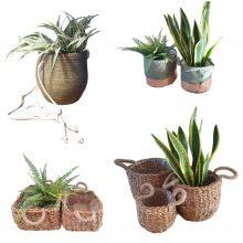 Plantenhouders